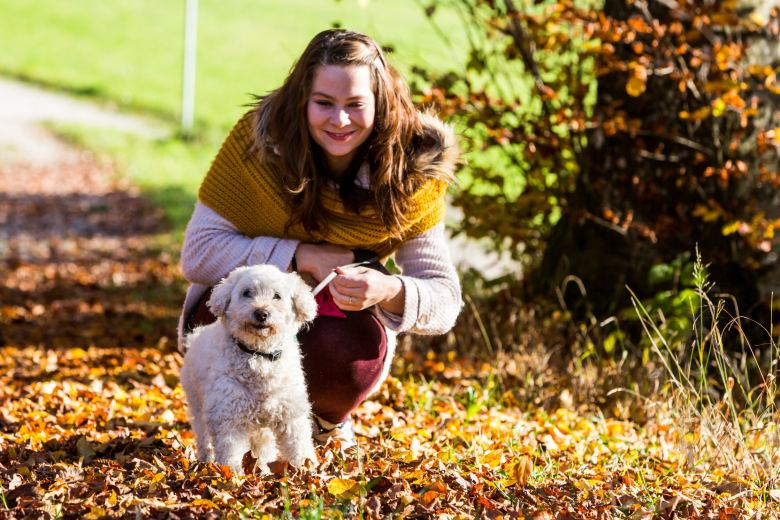 The best dog food for cushing's disease