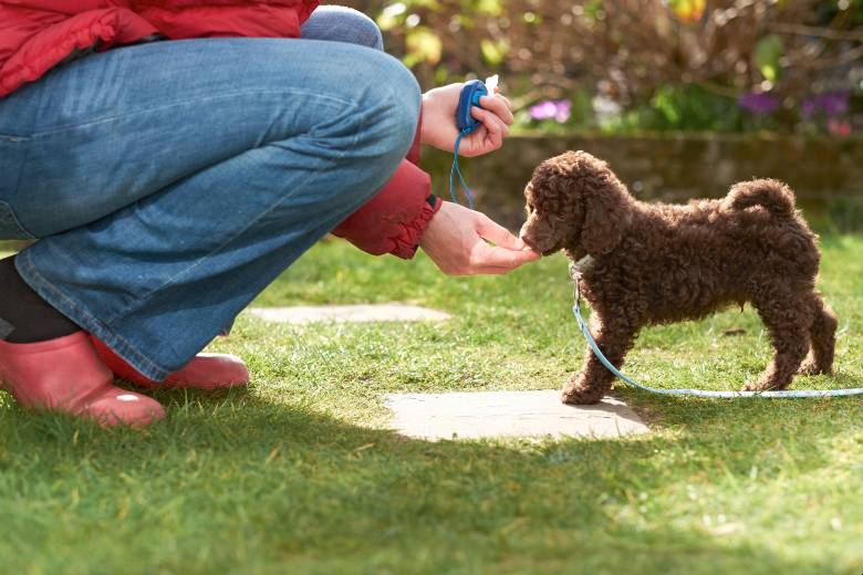 Clicker training a dog