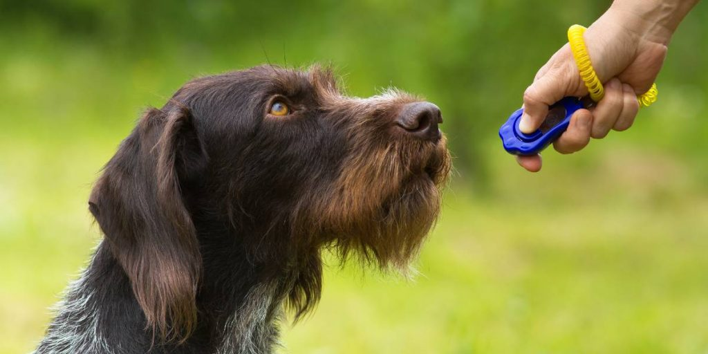 How to clicker train a dog