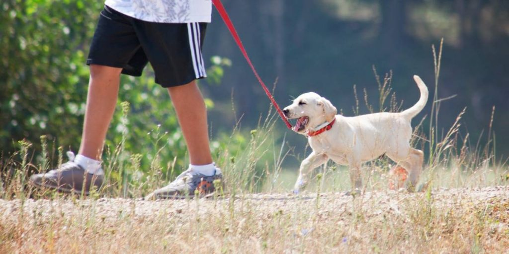 Leash training a puppy in 5 simple steps